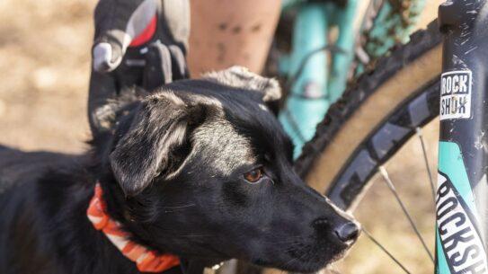 rosie trail dog 2994 1544410991